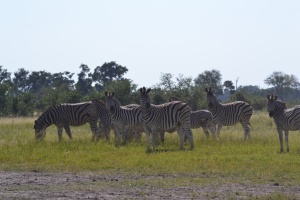 Zebra sighting!