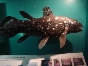 Coelacanth!